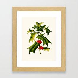 Ilex cornuta Vintage Scientific Botanical Flower Illustration Hand Drawn Art Framed Art Print