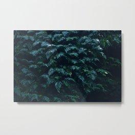 fern field Metal Print
