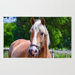 Equine Beauty Rug