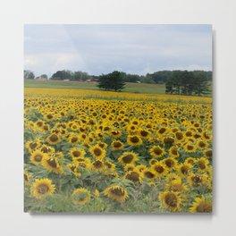 Field of a Million Sunfowers I Metal Print