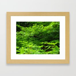 Japanese Maple Young Green Leaves and Raindrops Photography Framed Art Print
