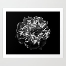 Backyard Flowers In Black And White 3 Art Print