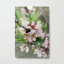 Flor de cerezo Metal Print