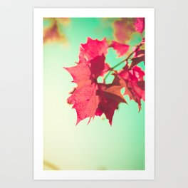 Red Maple Leafs Art Print