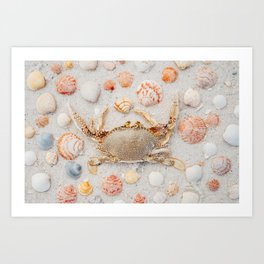 Crab and Shells Art Print