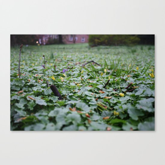 Meadow no.1 Canvas Print