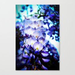Flowers magic 2 Canvas Print