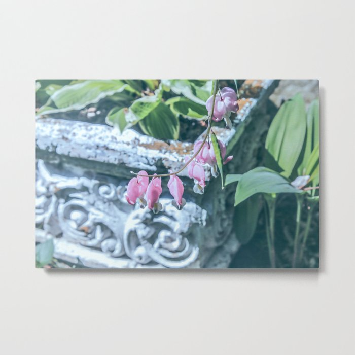 Soft Pink Bleeding Hearts Metal Print