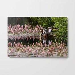Grede stretching wings on pond, with flowering weed. Metal Print