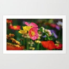 Frivolous Anemones in Spring Art Print