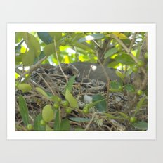Dove Nest Art Print