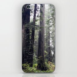redwoods iPhone Skin