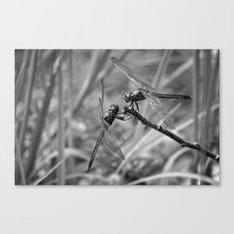 Dragonflies at Rest Canvas Print
