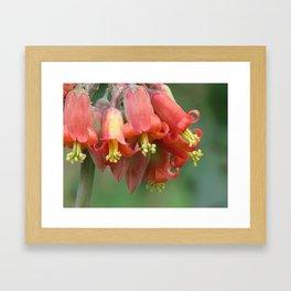 Red bells Framed Art Print