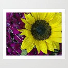 Sunflower and Sweet William Art Print