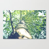 birch Canvas Prints featuring Birch by nadja-elli