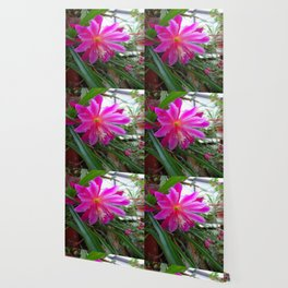 """BLOOMING FUCHSIA PINK """" ORCHID CACTUS"""" FLOWER Wallpaper"""
