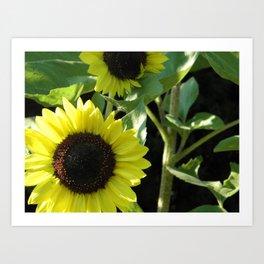 Growing Sunshine Art Print