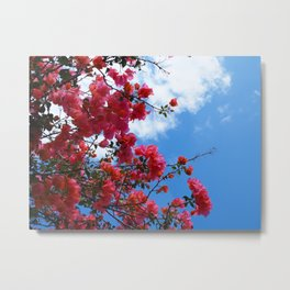 Look Up To The Bougainvillea Metal Print