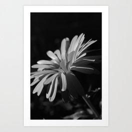 Daisy At Night Art Print