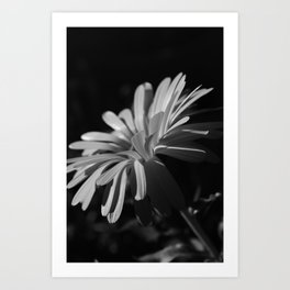 Daisy At Night Art Print