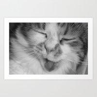 Sleepy Kitty - B&W Art Print
