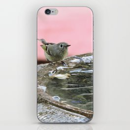 Kinglet at the Basin Rim iPhone Skin