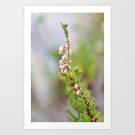 Pink heather Art Print