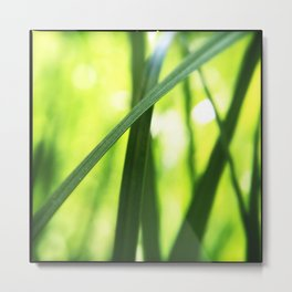 Beetle in the Grass Metal Print