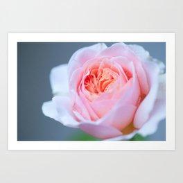 Forever in Love - Pink Rose #1 #decor #art #society6 Art Print