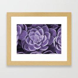 succulent Blossom violet color Framed Art Print