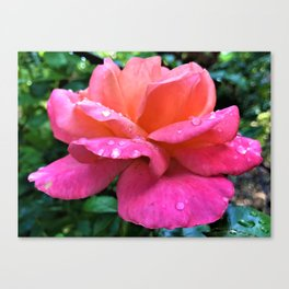 Rose romance Canvas Print