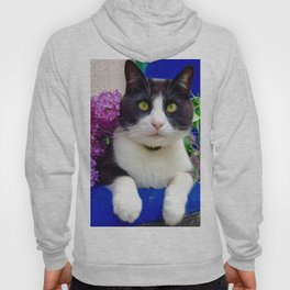 Orazio charming cat in the blue Hoody