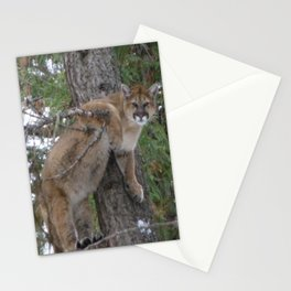 Mountain Lion in Montana Stationery Cards