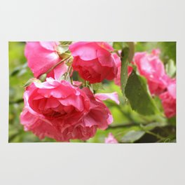 Rose Pink Rug