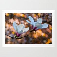 Blooming Magnolia Art Print