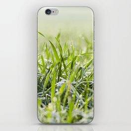 young grass plants, close-up iPhone Skin