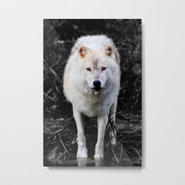The Wolf Stare Metal Print