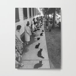 Black Cats Auditioning in Hollywood black and white photograph Metal Print
