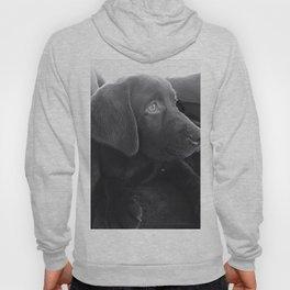Labrador Puppy Portrait Hoody