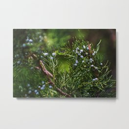 The Joyful Cedar Tree. Metal Print