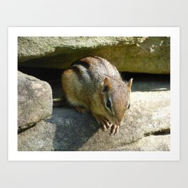 chipmunk 2015 IX Art Print