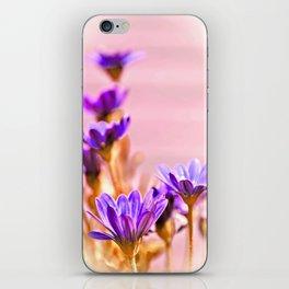 Osteospermum flowes iPhone Skin