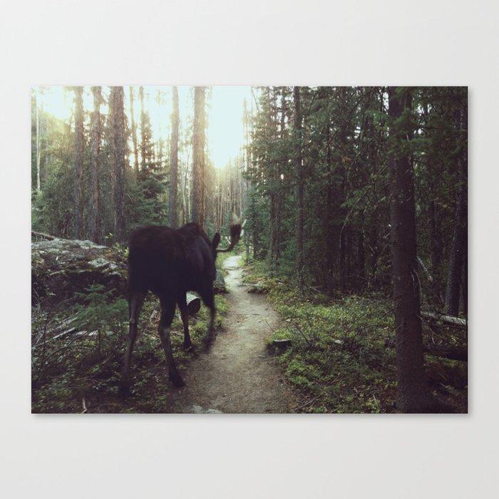 Trail Moose Canvas Print