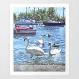 swans and boats at Christchurch harbour UK Art Print