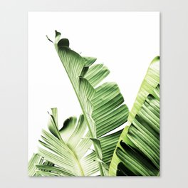Banana leaves, Leaf, Plant, Modern, Wall Art, Tropical Canvas Print
