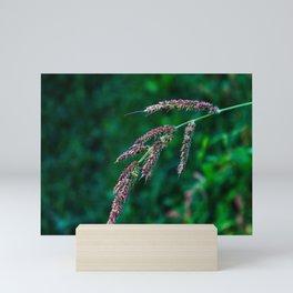 Barnyard grass Mini Art Print