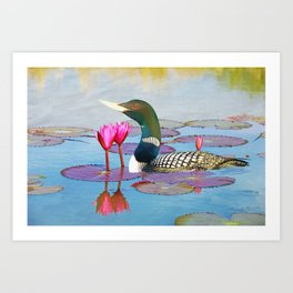 Yellow Billed Loon and Pink Lotus Flowers Art Print