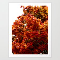 Autumn red tree Art Print