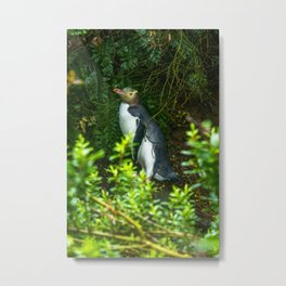 Yellow-Eyed Penguin Metal Print